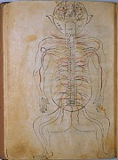 1400 Framed Prints - The Human Nervous System, From Mansurs Framed Print by Everett