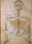 1400 Prints - The Human Skeleton, From Mansurs Print by Everett