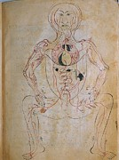 1400 Prints - The Human Venous System, From Mansurs Print by Everett