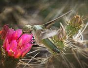 Saija  Lehtonen - The Hummingbird and the Flower