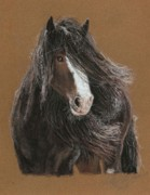 Equine Pastels Posters - The Immortal Shire Poster by Terry Kirkland Cook