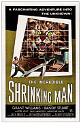 1957 Movies Prints - The Incredible Shrinking Man, 1957 Print by Everett