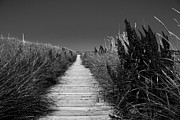Outdoors Photo Originals - The Inverness Boardwalk by Michel Soucy