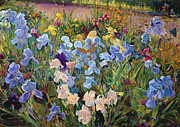 Garden Posters - The Iris Bed Poster by Timothy Easton