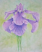 Heather Perez Metal Prints - The Irises Metal Print by Heather Perez