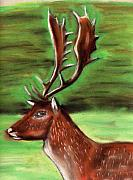 Deer Pastels - The Irish Deer by Alan Hogan