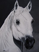 Horse Head Paintings - The Ivory Queen by Kayleigh Semeniuk
