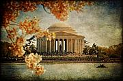 Cherry Blossoms Digital Art Posters - The Jefferson Memorial Poster by Lois Bryan