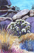 National Park Drawings Framed Prints - The Joshua Tree Framed Print by Carol Wisniewski
