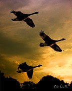Flying Geese Prints - The Journey South Print by Bob Orsillo