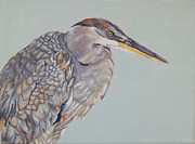 Great Blue Heron Paintings - The Juvenile by Jason M Silverman