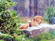 Animal Digital Art Digital Art Prints - The King At Rest Print by Methune Hively