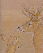 Mule Deer Pastels Posters - The Kiss Poster by Flo Hayes