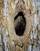 The Knot Hole Photograph by Peyton Imes - The Knot Hole Fine Art ...