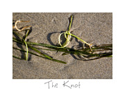 Sand Art Prints - The Knot Print by Peter Tellone