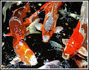 Koi Digital Art Prints - The Koi Print by Mindy Newman