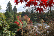 The Lake At Sheffield Park Print by Barry Goble