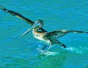 Tropical Waters Metal Prints - The Landing Metal Print by David Lee Thompson