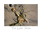 Sand Art Prints - The Last Straw Print by Peter Tellone