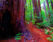 Marin County Digital Art Prints - The Light in the Woods Print by Ben Upham