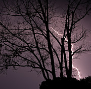 Tim Scullion - The Lightning Tree