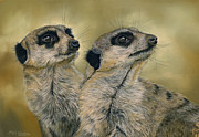 Meerkat Drawings - The Likely Lads by Bev Lewis