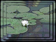 Reflecting Art - The Lily Bloom by Tim Allen