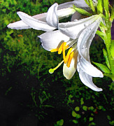 Gardening Photography Paintings - The lily by Odon Czintos