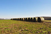 Hay Bales Art - The Line Up by Bill Cannon