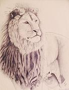 Wildlife Drawings Drawings Framed Prints - The Lion of Judah  Framed Print by Jamey Balester