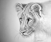 Lioness Drawings Posters - The Lioness Poster by Barbra Joan Araneo