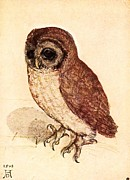 Renaissance Paintings - The Little Owl by Pg Reproductions