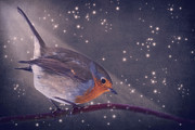Winter Night Mixed Media Posters - The little robin at the night Poster by Angela Doelling AD DESIGN Photo and PhotoArt