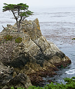 Alone Posters - The Lone Cypress - California Poster by Brendan Reals