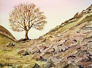 Sycamore Paintings - The Lone Sentry-Sycamore Gap. by John Cox