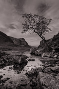 Lone Tree Prints - The Lone Tree of Glencoe Print by Ben Spencer