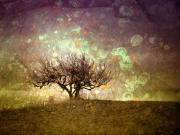 Okanagan Prints - The Lone Tree Print by Tara Turner