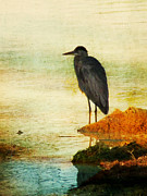 Wading Bird Framed Prints - The Lonely Hunter Framed Print by Amy Tyler