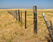 Old Fence Posts Art - The Long Long Fence by Lydia Warner Miller