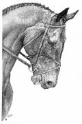 Horses Drawings - The Look of Eagles by Paula Hammond