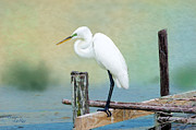 Egret Digital Art Posters - The Lookout Poster by Betty LaRue