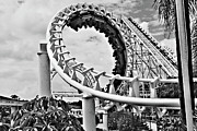 Roller Coaster Metal Prints - The Loop Black and White Metal Print by Douglas Barnard