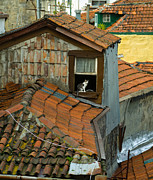 Europe Photo Originals - The Lord of the Roofs by Dias Dos Reis