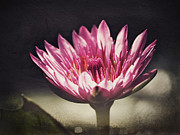 Waterlily Art - The Lotus Flower by Paul Topp