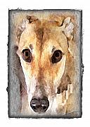 Greyhound Posters - The Loving Eyes of a Greyhound Poster by Terry Mulligan