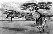 The Tiger Drawings - The Lunge by Peter Piatt