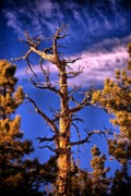 Tree Creature Metal Prints - The Lurker Metal Print by Charles Dobbs