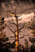 Tree Creature Metal Prints - The Lurker II Metal Print by Charles Dobbs