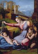 John The Baptist Posters - The Madonna of the Veil Poster by Raphael