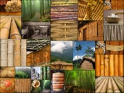 The Magic Of Bamboo Print by Yali Shi